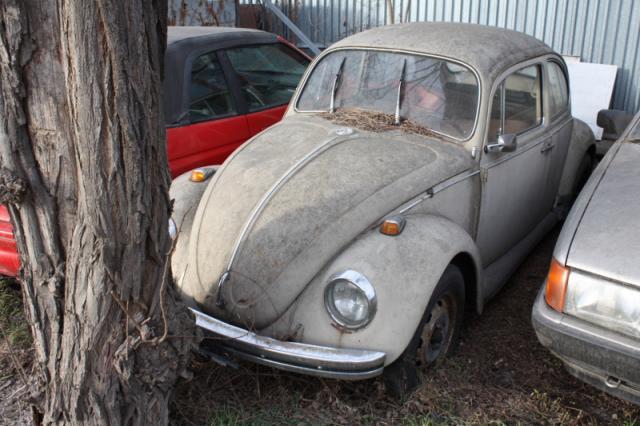 VW Käfer gesichtet
