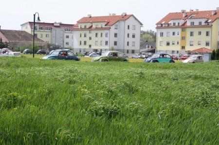 VW Käfertreffen Orth an der Donau Marchfelder Käferclub 2013