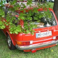 VW Käfertreffen Eggenburg 267