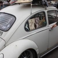 VW Käfertreffen Eggenburg 2015 155